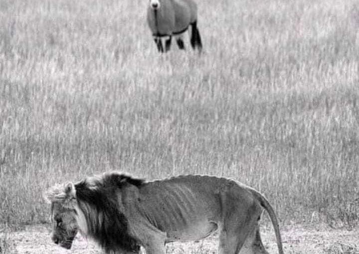 Il vecchio leone