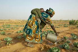 NIGERIA: Bio-fortified Crops, sustainable but not sufficient